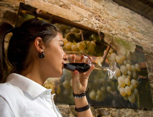 vineyard-GT09