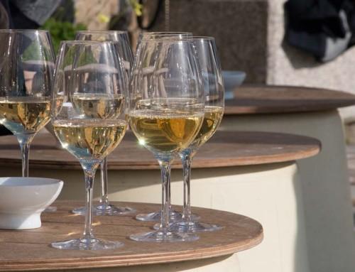 vineyard-GT13