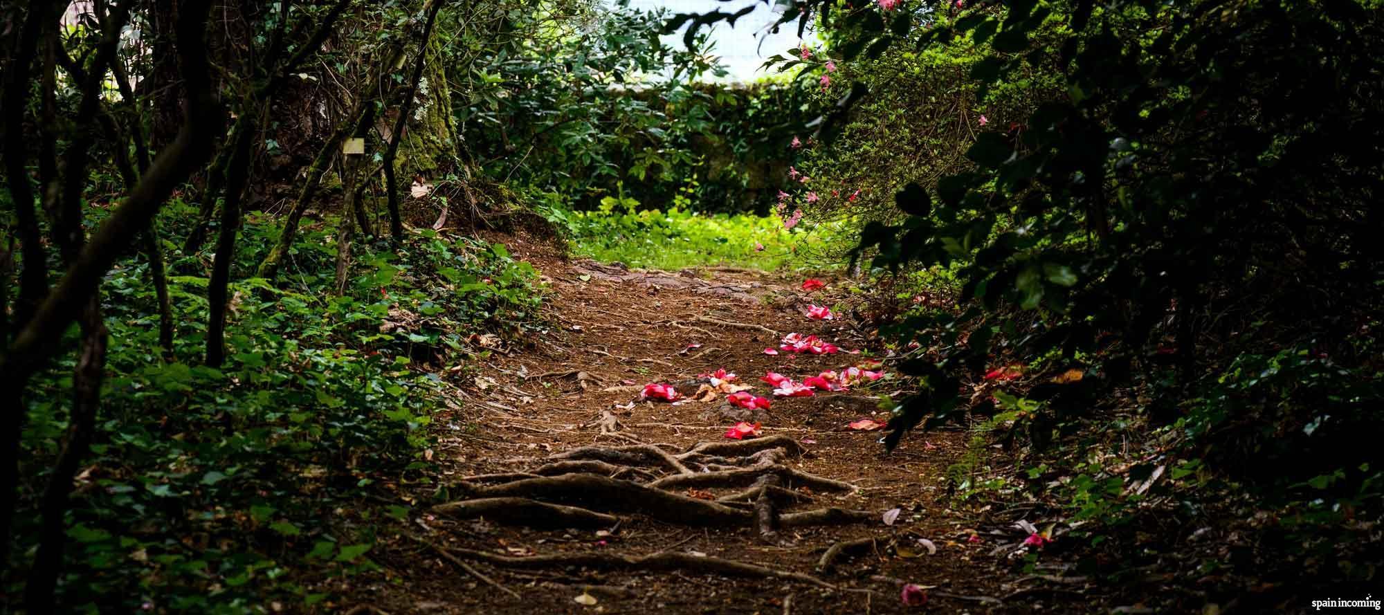 The Camellia route in Galicia - Garden