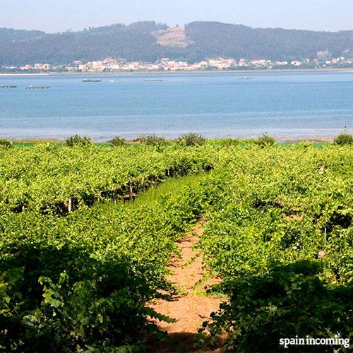 Hiking routes in Galicia - Vineyards and sea